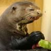 Não aprovou a melancia...