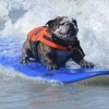 Cachorro surfista!