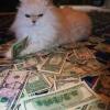 Um rico gato ou um gato rico?