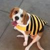 Uma abelha perfeita!
