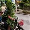 Homem Planta