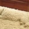 Cão camuflado!