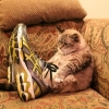 O gato de botas!