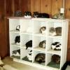 Gatos organizados!
