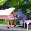Esquilo pianista!