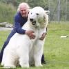 Amigo urso!