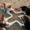 Um pacto canino!
