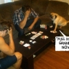 Poker animal!