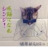 Gato Japonês...