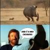 Cachorro do Chuck Norris