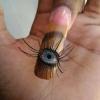 Um olho a mais...