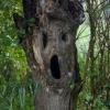 Floresta macabra!