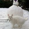 O gato de neve...