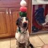 Testando a paciência do cãozinho...