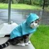 Eu acho que vai chover hoje...