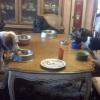 A hora sagrada da refeição!