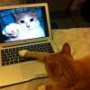 Gatos online!