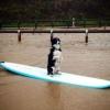 Cão surfistinha!