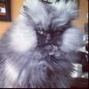 Gato assustador!