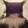 Gato sinistro