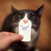 Sacaneando o gatinho...