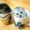 Chá de gatos...