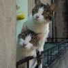 Gatinhos tarados...