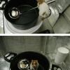 Ratatouille existe...