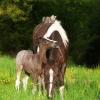 O pequeno jockey...