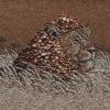 Arte da ucraniana Svetlana Ivanchenko com areia e conchas IX