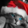 Esperando pelo Papai Noel!