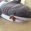 Na boca do tubarão...