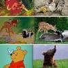 Animação VS realidade!