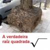 A verdadeira raiz quadrada!