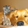 Amizade inacreditável!