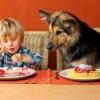 Ei, esse prato ai é meu...