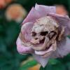 Flor macabra!