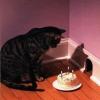 Aniversário do rato...