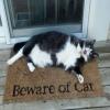 Cuidado com gato