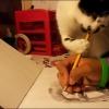 Aprendendo com o gato...