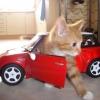 Gato motorizado...