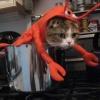 Camarão à la gato!