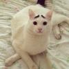 O gato com sombrancelhas...