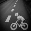 Cão ciclista!