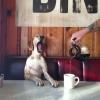 Bom dia...me serve aquele cafézinho...