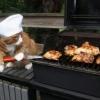 O gato churrasqueiro