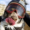 Um cão super radical!