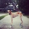 Maddie o cachorro equilibrista I