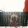 Maddie o cachorro equilibrista IX