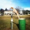 Maddie o cachorro equilibrista XIII